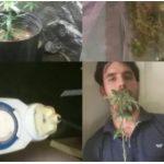 Lauro de Freitas: Homem é preso com plantação de maconha dentro de casa