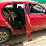 Homem é preso transportando PORCO dentro do carro em cadeirinha de bebê