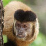 Sinal de Alerta! Macaco é encontrado morto em Lauro de Freitas