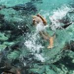 Namorado registra momento em que modelo é atacada por tubarão