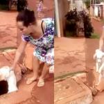 Mulher joga cachorro vivo dentro de caixa de esgoto