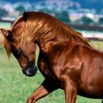 Homem é pego fazendo sexo com uma égua e diz que ela o seduziu
