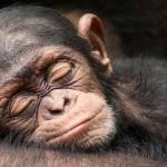 Mulher é condenada a 3 anos de prisão por 'assédio sexual' a um macaco