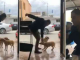 Homem que matou cachorro é encontrado morto