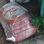 Imagens fortes: Saco com corpo esquartejado em Salvador assusta moradores
