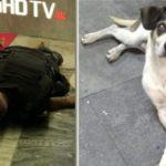 Morte de jovem no Extra causa menos indignação que a do cachorro no Carrefour