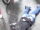 Homem cai da passarela