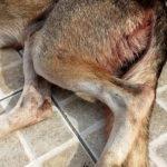 Homem de 25 anos estupra e mata cadela no Recife